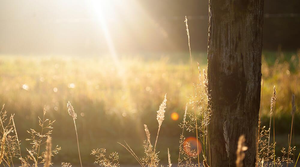 Sunshine Outdoors